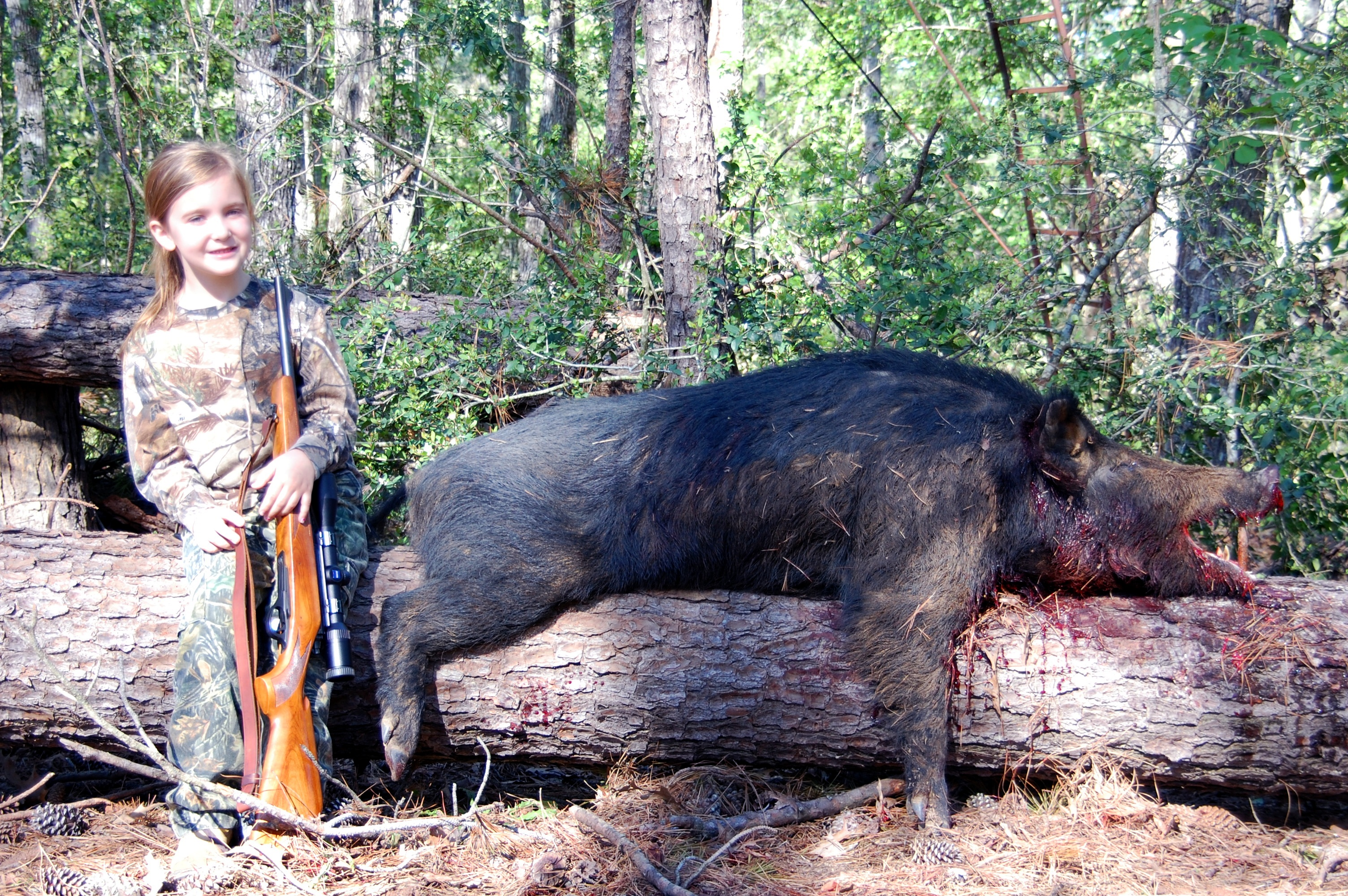 Giant Feral Pig | www.pixshark.com - Images Galleries With ...